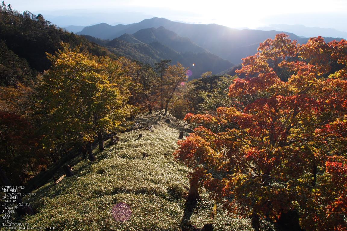http://www.yaotomi.co.jp/blog/walk/2012%E5%A4%A7%E5%8F%B0%E3%82%B1%E5%8E%9F%E7%B4%85%E8%91%89_yaotomi_EPL5_21.jpg