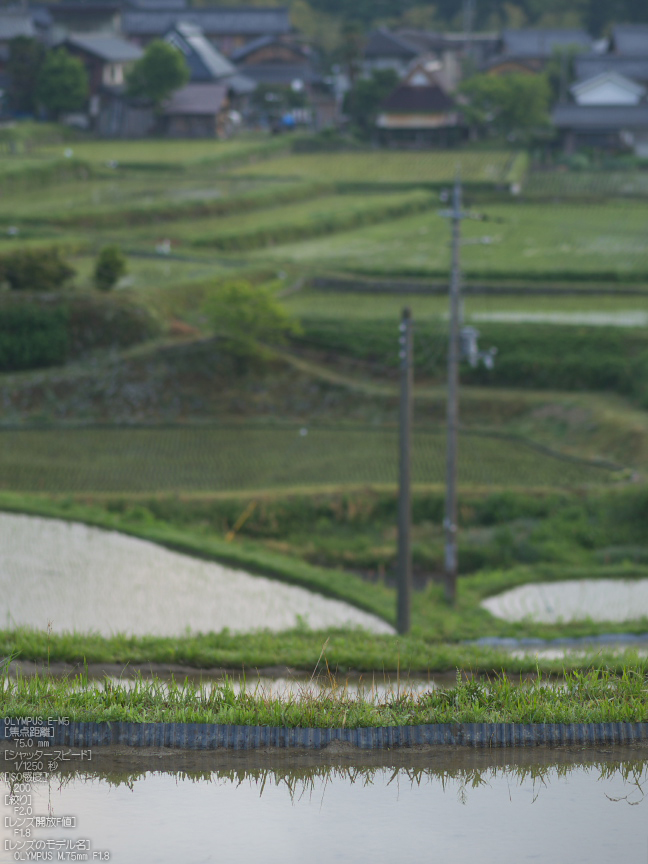 M.ZUIKO_DIGITAL_ED_75mm_F1.8_栗原・棚田_yaotomi_12.jpg