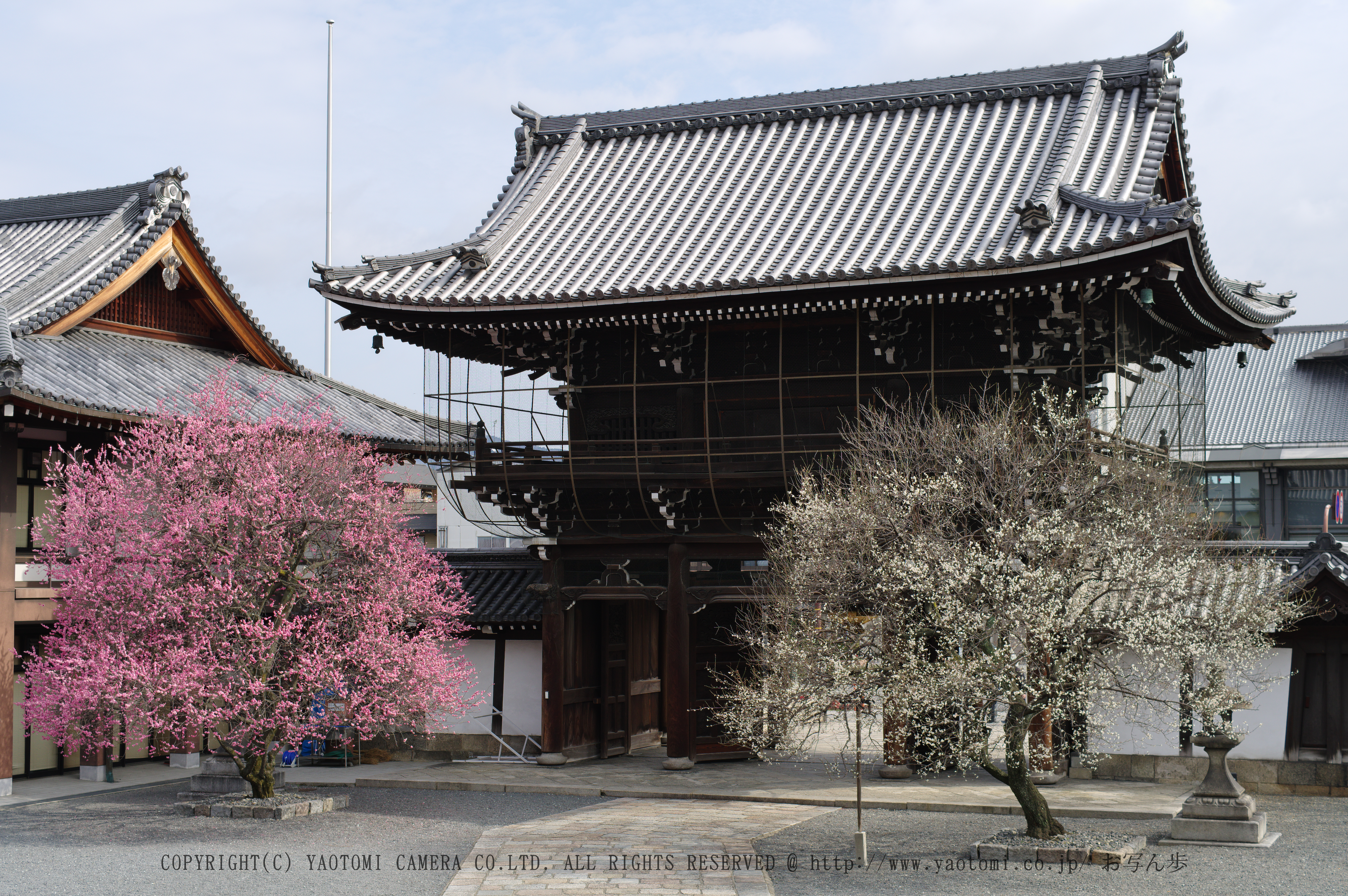 http://www.yaotomi.co.jp/blog/walk/PKP_1669%E6%96%87%E5%AD%97_F.jpg