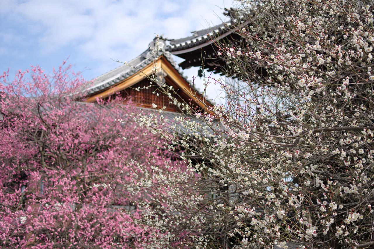 http://www.yaotomi.co.jp/blog/walk/PKP_1673s.jpg