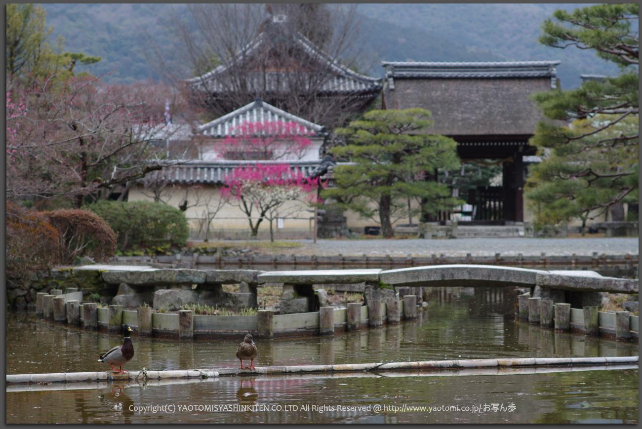 http://www.yaotomi.co.jp/blog/walk/PKP_1920s_T.jpg
