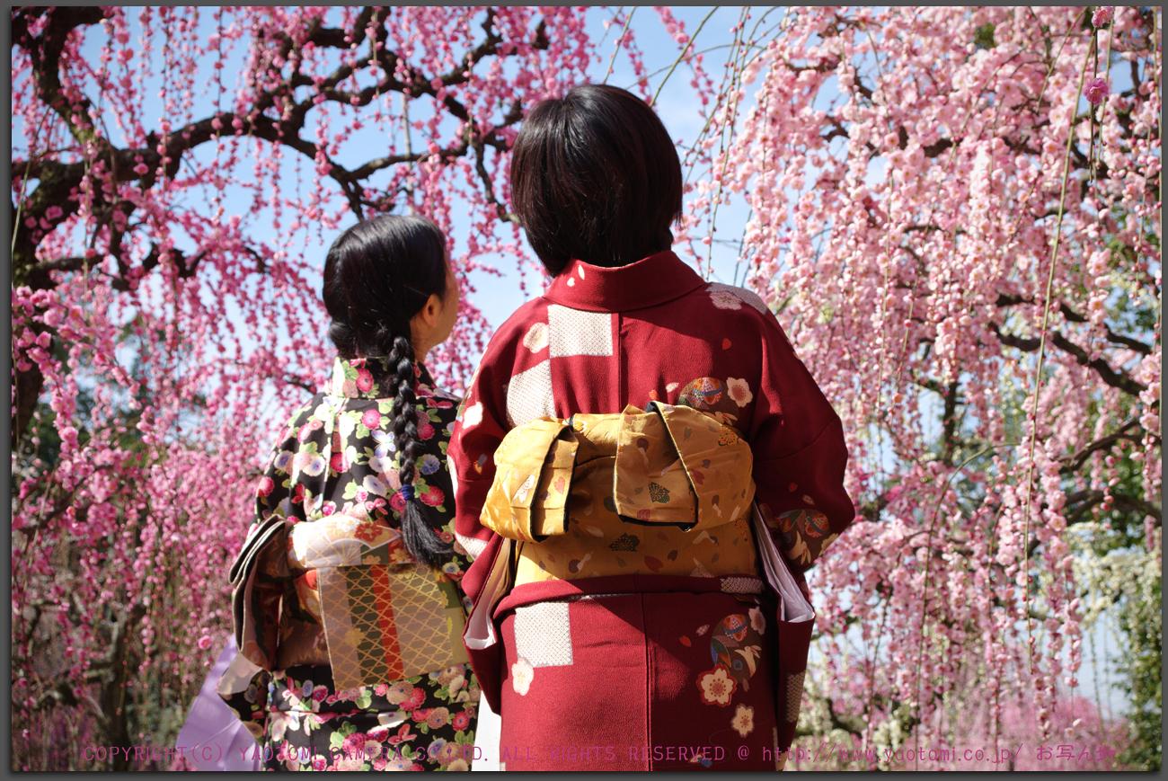 http://www.yaotomi.co.jp/blog/walk/PKP_2717%2C2017yaotomi_ps_s.jpg