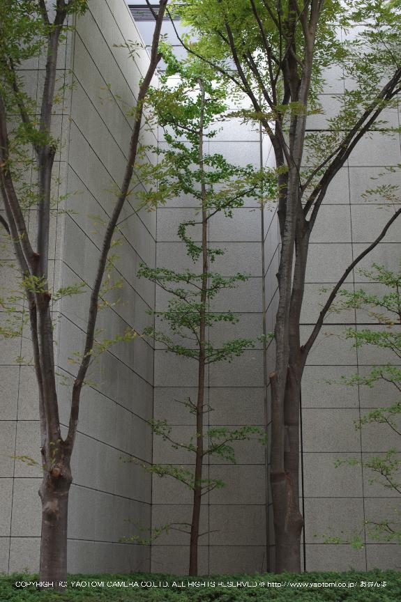P_K30076_Cap(35),2013yaotomi_.jpg