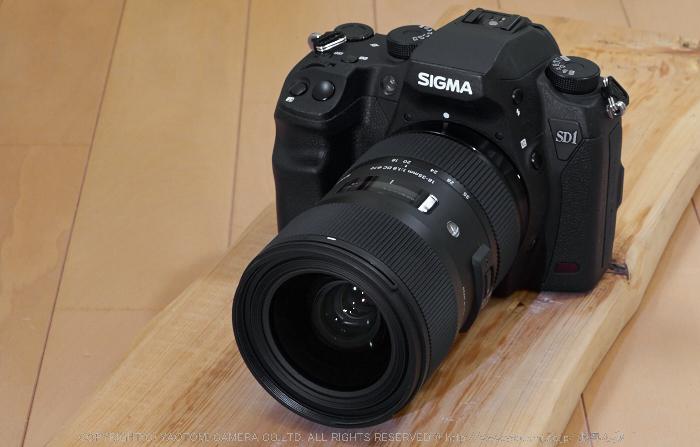SD1merrill(P5140007)2014yaotomi_.jpg