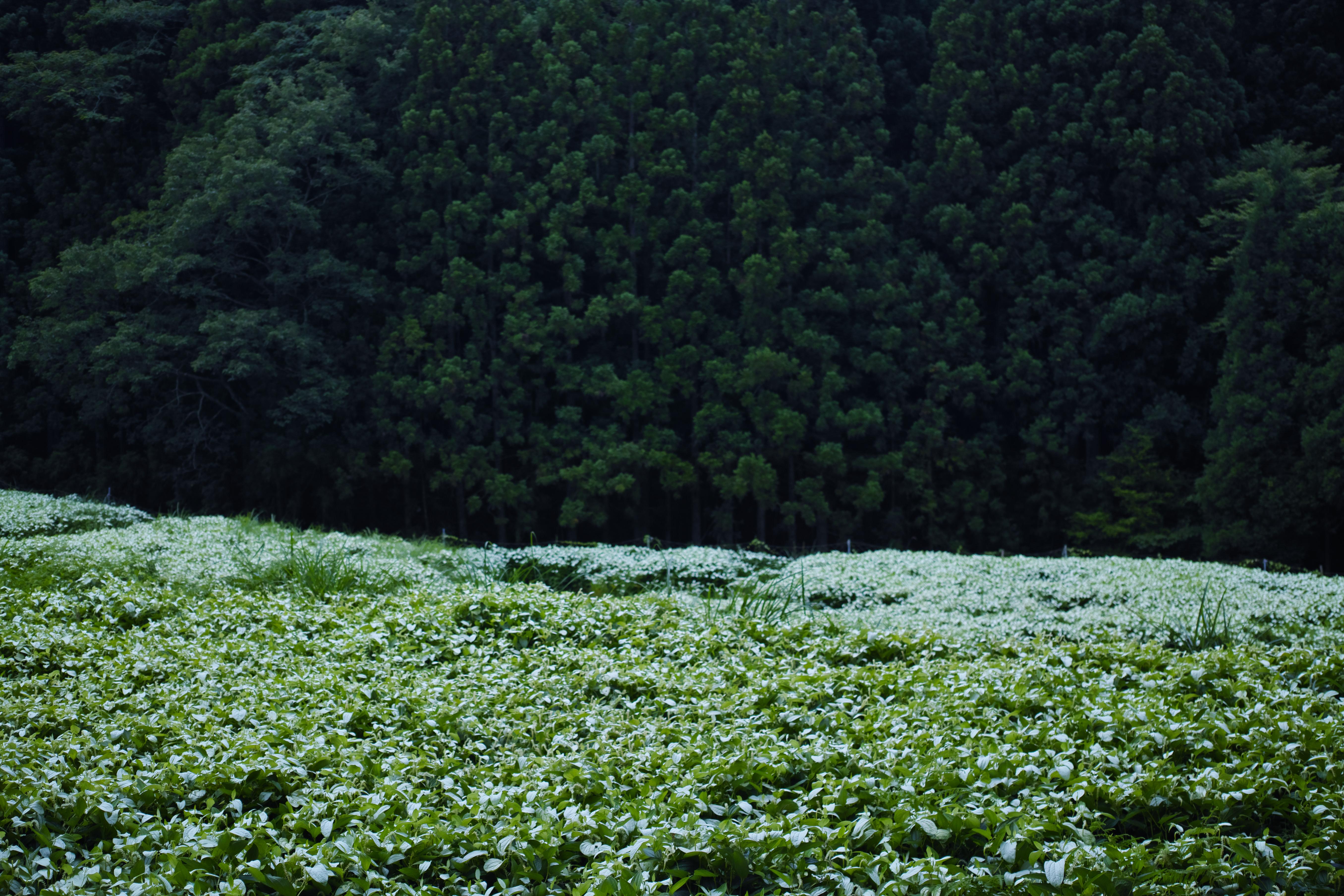 http://www.yaotomi.co.jp/blog/walk/SDIM0512.jpg