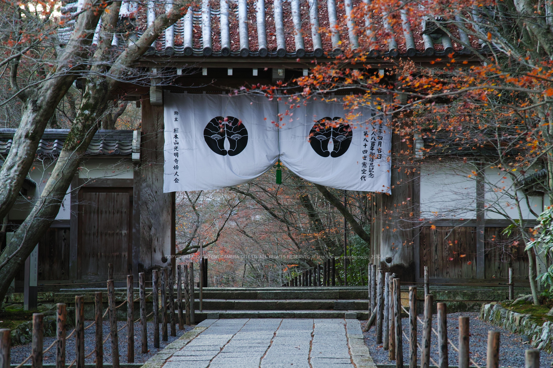 http://www.yaotomi.co.jp/blog/walk/SDQH0228%2C2016yaotomi%201.jpg