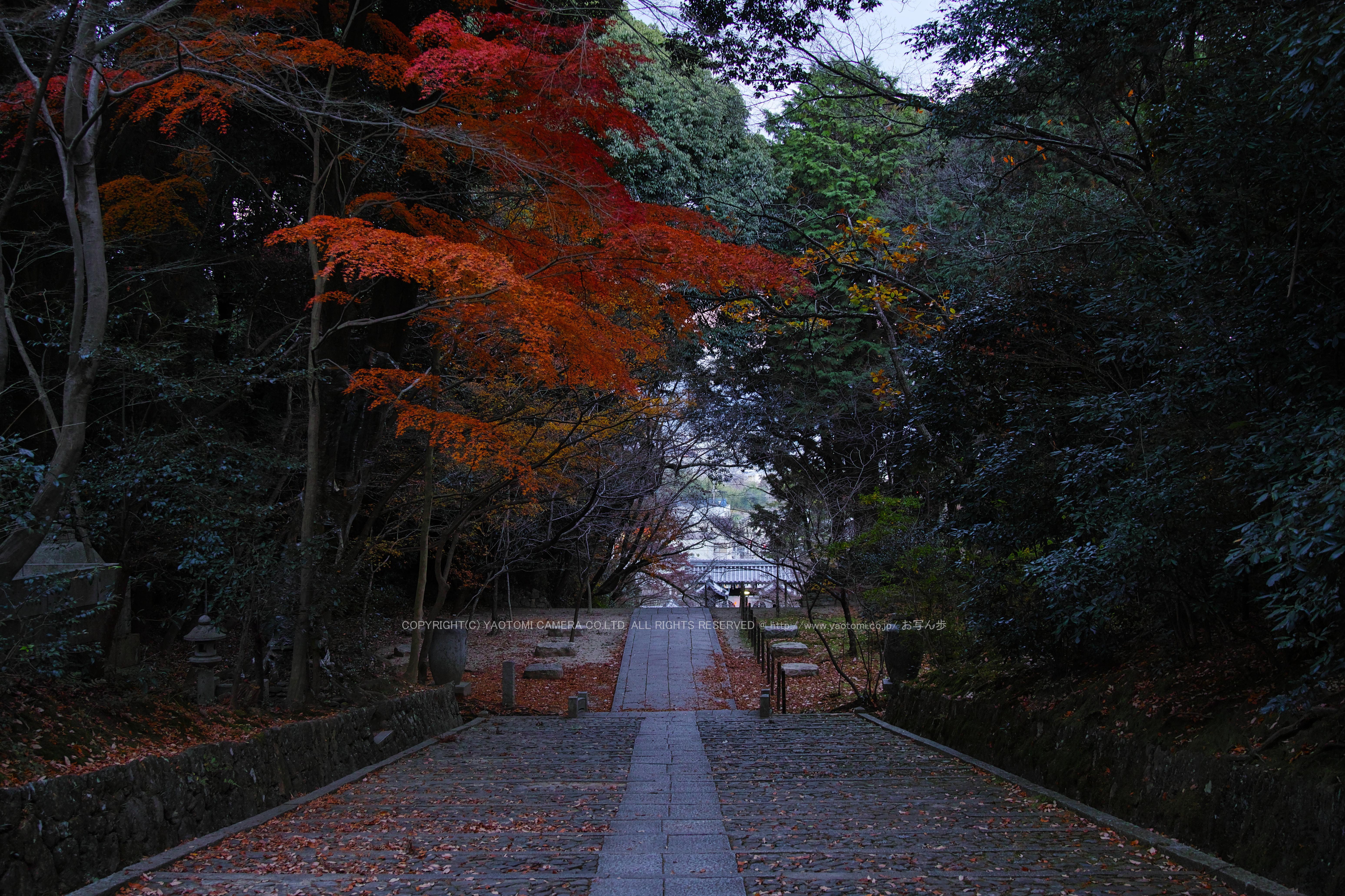 http://www.yaotomi.co.jp/blog/walk/SDQH0280%2C2016yaotomi%201.jpg