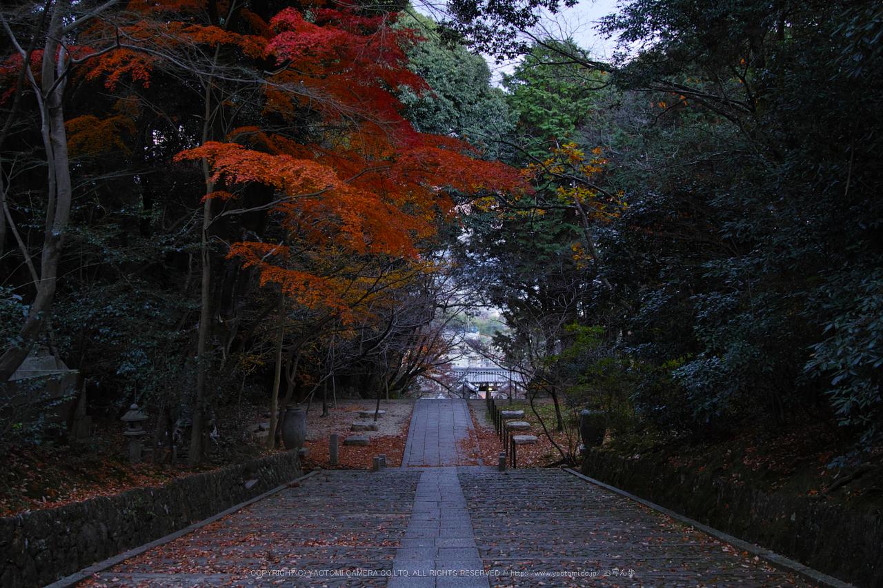 http://www.yaotomi.co.jp/blog/walk/SDQH0280%2C2016yaotomi.jpg