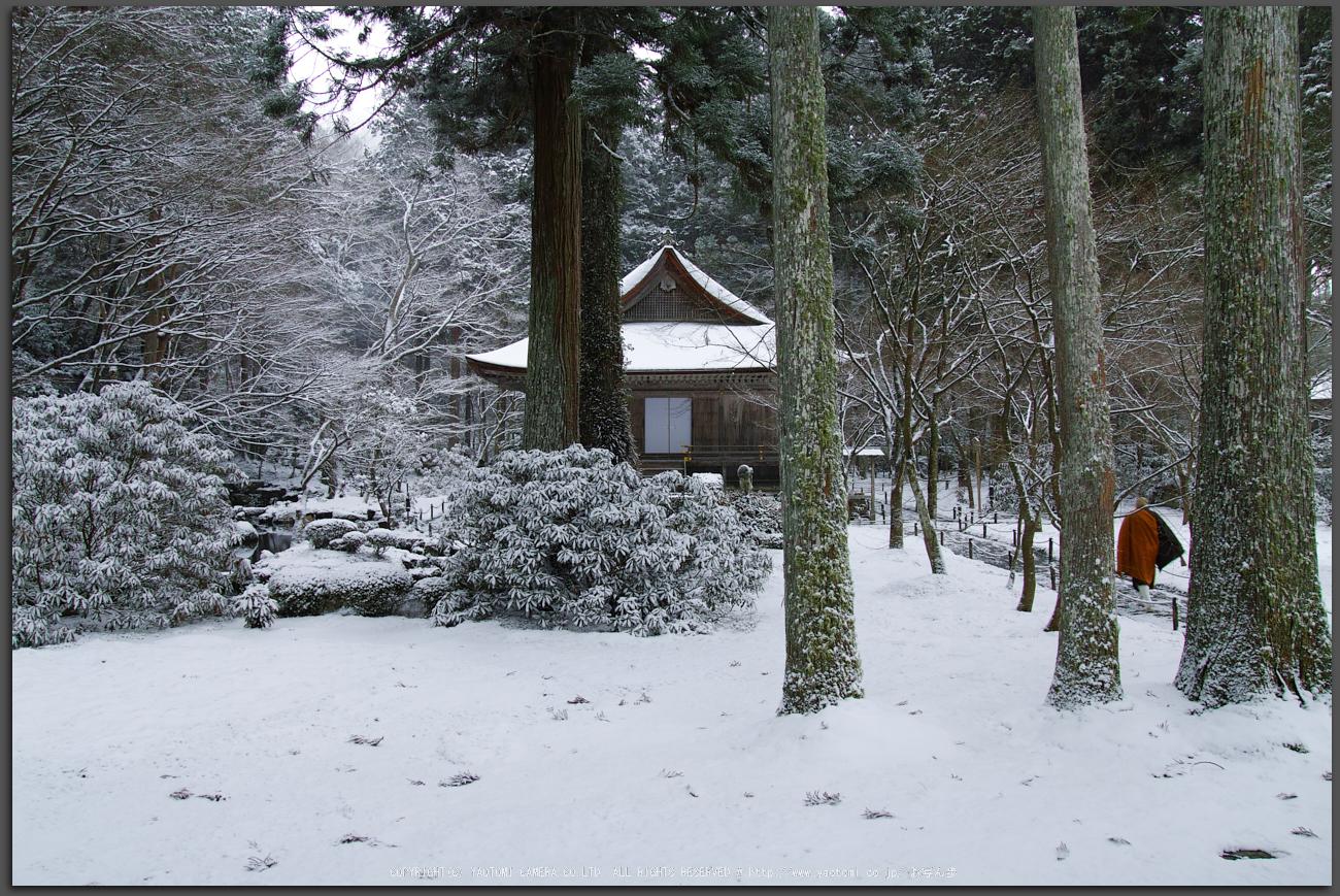 http://www.yaotomi.co.jp/blog/walk/SDQH0798%2Cjyousyoukouji%2C2017yaotomi_T.jpg