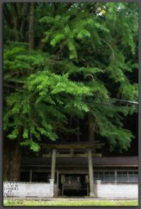 花脊松上げ-2.jpg