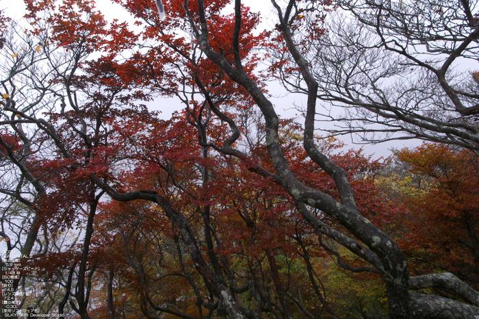 201010_大台ヶ原紅葉_24.jpg