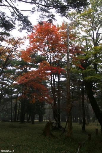 201010_大台ヶ原紅葉_29.jpg
