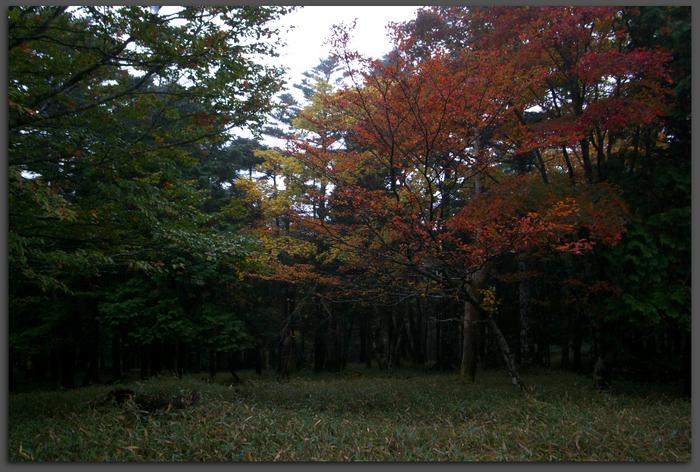 201010_大台ヶ原紅葉_top1.jpg