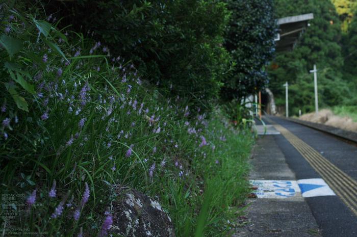 201010_紀勢本線_15.jpg