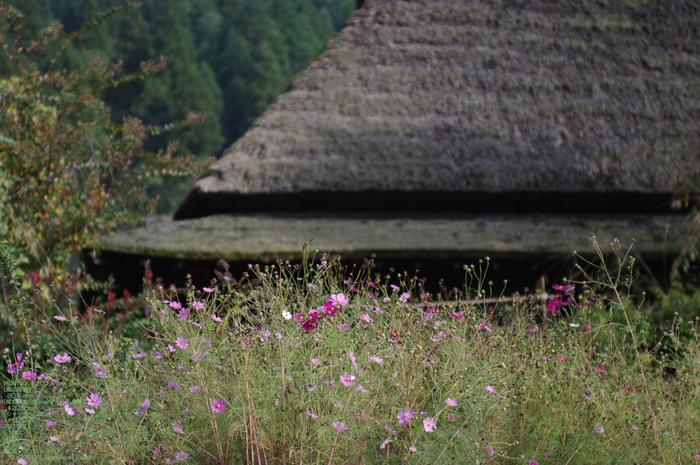201010_美山_10.jpg