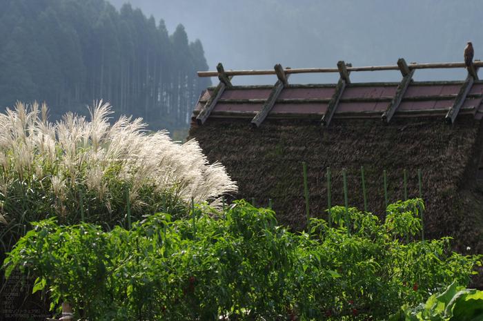 201010_美山_22.jpg