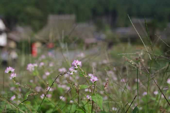 201010_美山_4.jpg