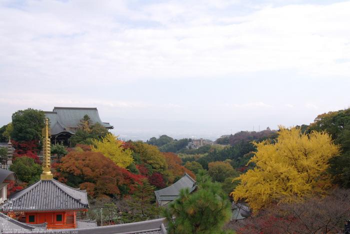 2010_信貴山・紅葉_17.jpg