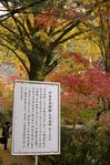 2010_信貴山・紅葉_7.jpg