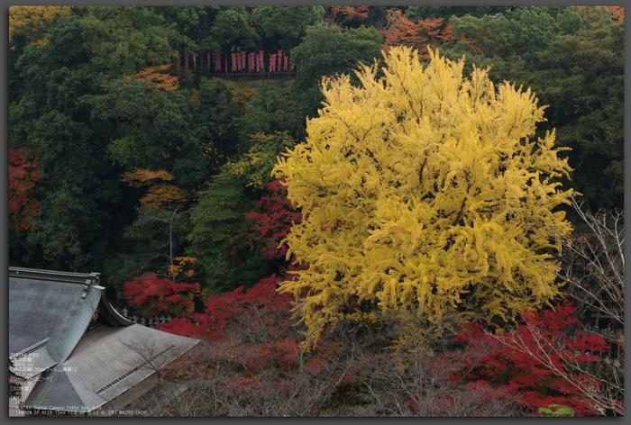 2010_信貴山・紅葉_top2.jpg