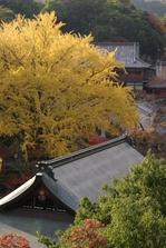 2010_信貴山・紅葉_top3.jpg
