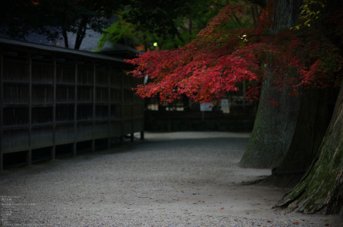 2010_室生寺・紅葉_3.jpg