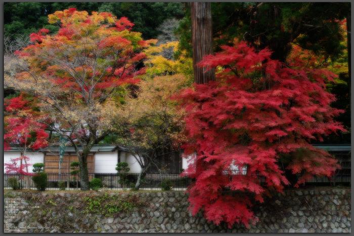 2010_室生寺・紅葉_top1.jpg