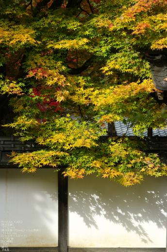 2010_常照皇寺・紅葉_10.jpg