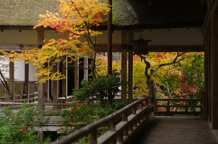 2010_常照皇寺・紅葉_12.jpg