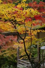 2010_常照皇寺・紅葉_15.jpg
