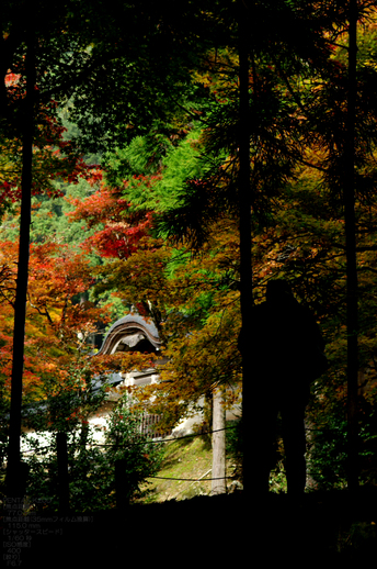 2010_常照皇寺・紅葉_24.jpg