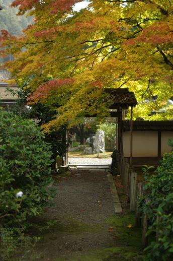 2010_常照皇寺・紅葉_6.jpg