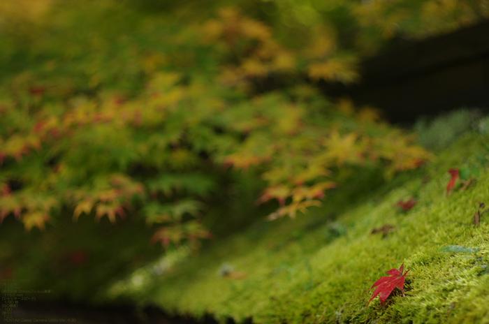 2010_常照皇寺・紅葉_9.jpg