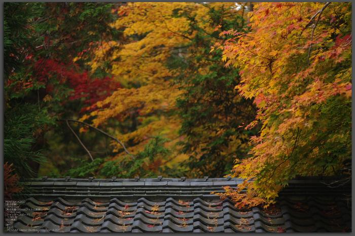 2010_常照皇寺・紅葉_top1.jpg
