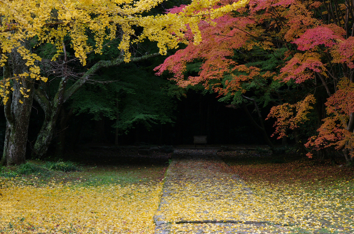 2010_弘仁寺・紅葉_2.jpg