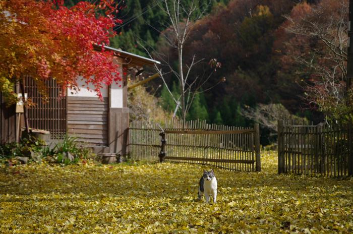 2010_月うさぎ・紅葉_2.jpg