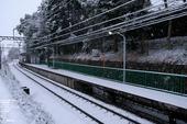 20110211_雪_4.jpg