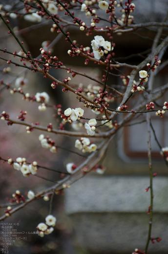 2011_北野天満宮・初梅_13.jpg