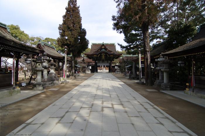 2011_北野天満宮・初梅_2.jpg