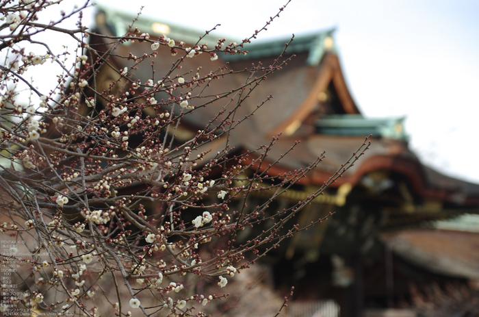 2011_北野天満宮・初梅_3.jpg