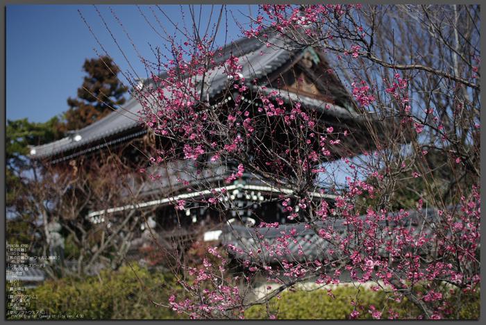 2011_梅宮大社・梅花_top.jpg