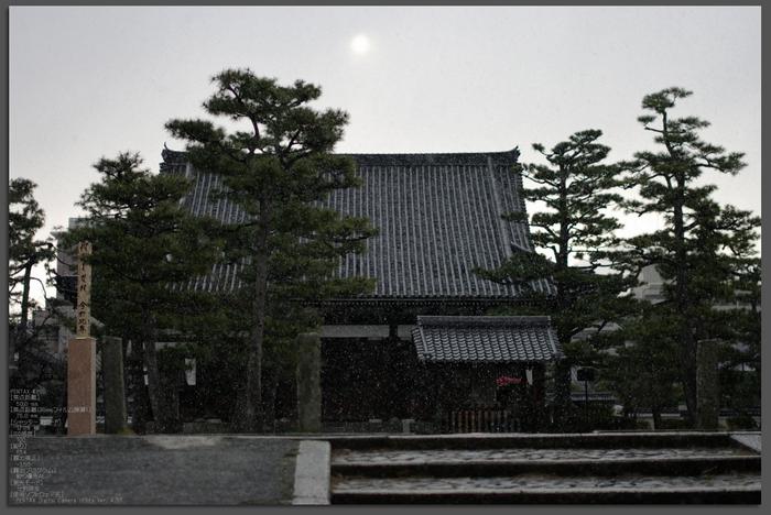 2011_3_百万遍知恩寺・桜_top.jpg