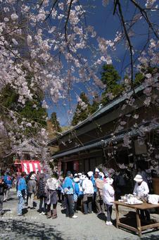 2011_4_三多気・桜_17.jpg