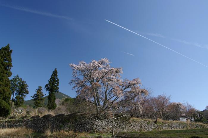 2011_4_三多気・桜_3.jpg