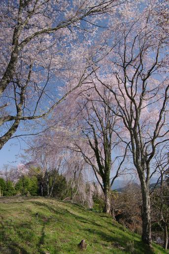 2011_4_吉野山・桜_50.jpg