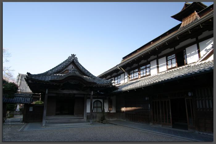 2011_4_吉野山・桜_top2a.jpg