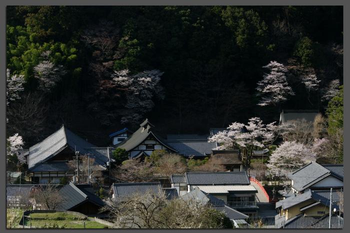 2011_4_室生寺・桜_top.jpg