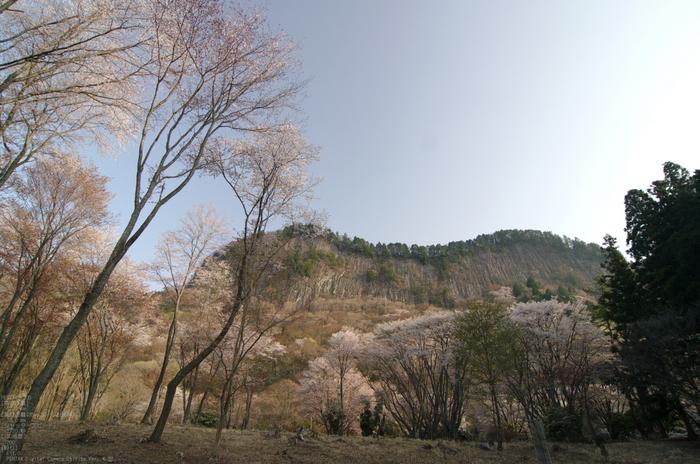 2011_4_屏風岩・桜_10.jpg