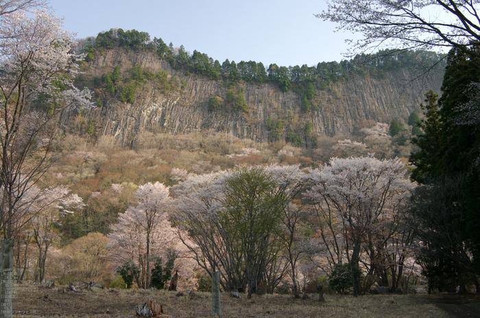 2011_4_屏風岩・桜_11.jpg
