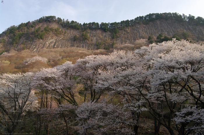 2011_4_屏風岩・桜_3.jpg